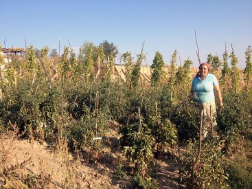 1-Roma-woman-fighting-with-the-drought